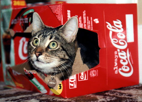 Willow in Coke box