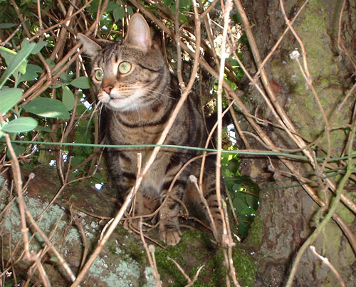 Willow in apple tree