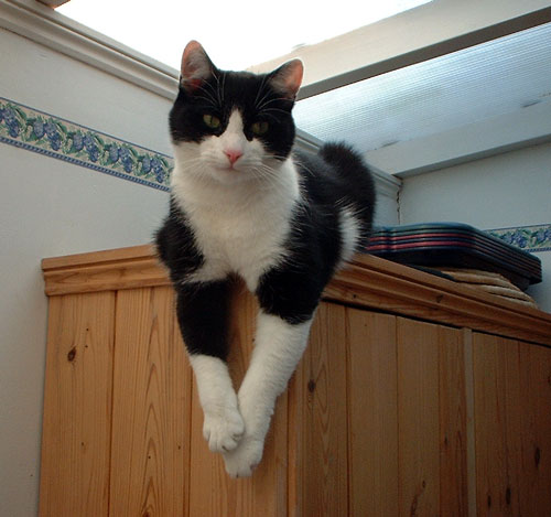 Zorro on cupboard