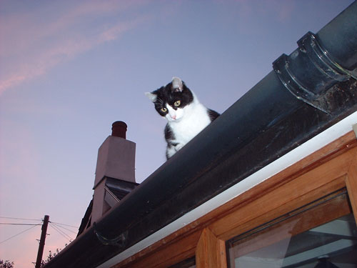 Zorro on conservatory roof