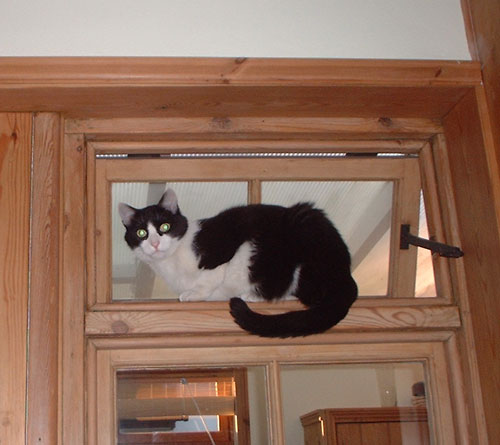Zorro in window